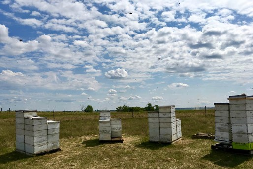 four bee hives shown against a big blue sky