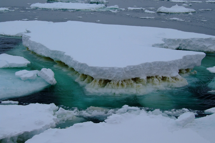 ice flow with algae