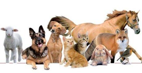 Lavorare con gli animali ecco le idee pi bizzarre for Lavorare con i cani