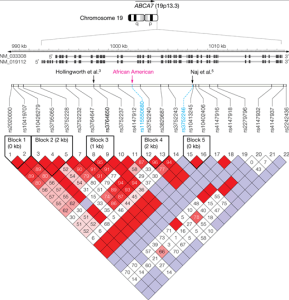 Regional Association Plot of the ABCA7 Region (±100 Kilobases) in the African American Sample and the White Sample Described in Naj et al5 Based on the GRCh37/hg19 Genome Build (Image Credit: JAMA)