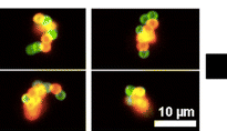 3D Printing with Nucleic Acid Adhesives