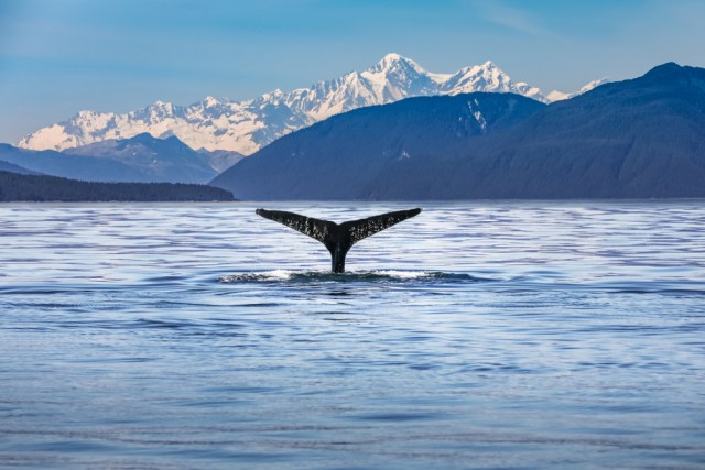 Win or Lose, These Crypto Whales Share Their Trades