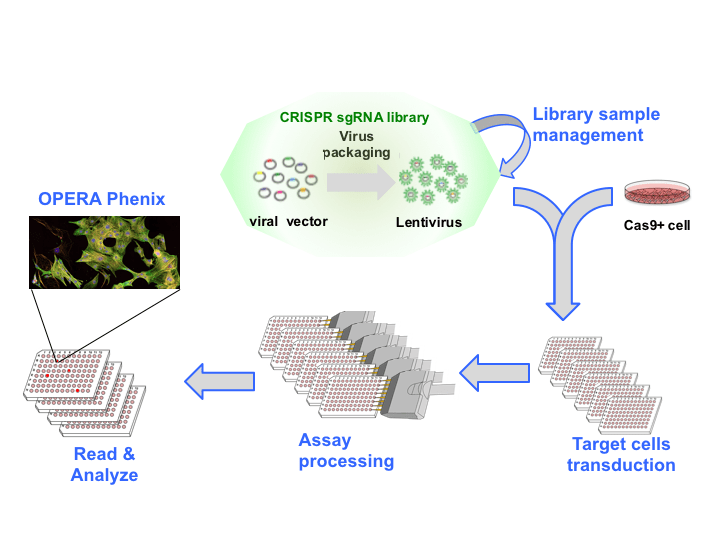 CRISPR technology workflow