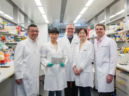 Cancer Researchers at Walter and Eliza Hall Institute