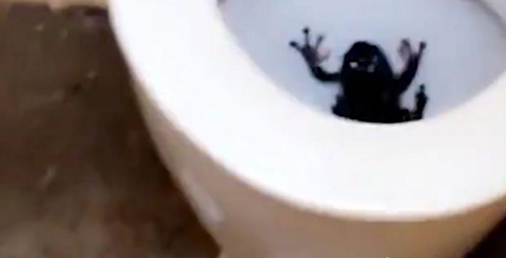 極大青蛙在馬桶裡跳出嚇倒背包客!網友說土澳廁所跟本是一座動物園-澳洲唐人街