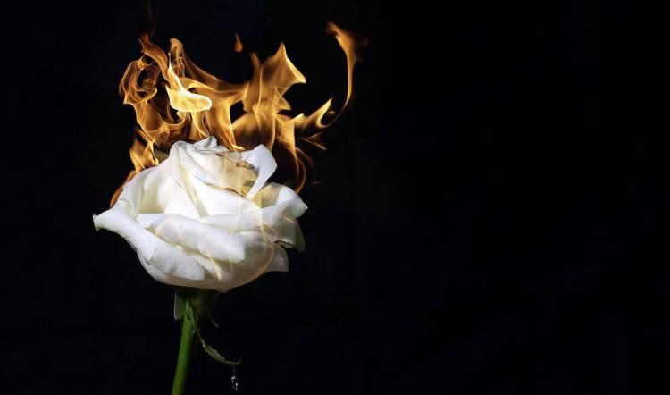 """Foster Zinn's """"rose on fire"""" photograph"""