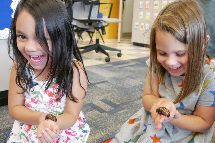 Iliana Monterroso and Phoebe Hersch learn about Madagascar cockroaches.