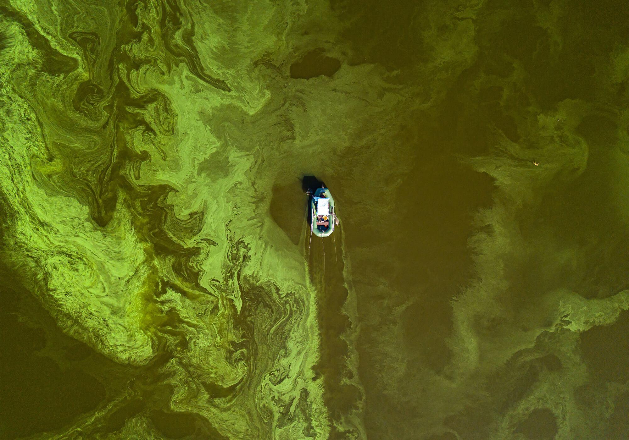 Algae Bloom Environmental Pollution