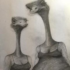 "Yishai Minkin MFA Illustration '14 ""This is just graphite pencil. Pencil helps you get to the core of things quickly—the initial thoughts, inklings. Animals have so much human expression, and the ostrich face is so interesting. They're like a couple of old ladies sitting on a train. They may not be thinking anything…or they might be thinking anything at all."" Minkin teaches illustration, painting, and color theory to FIT undergraduates. He has drawn for The Wall Street Journal, The New York Times, New York magazine, Playboy, Spin, and Rolling Stone."