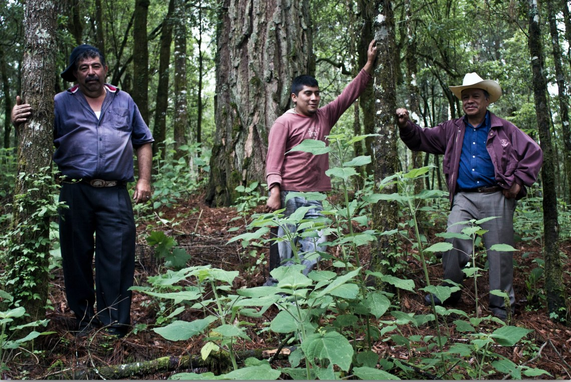 ejidos and communities the landholders in mexico conserve the natural resources to stop deforestation and forest degradation