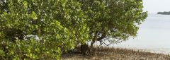 Muddy waters: Exploring mangrove governance in Tanzania's Rufiji Delta and beyond