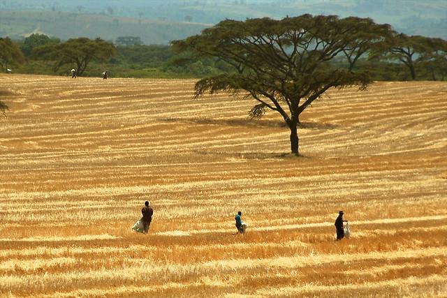 Landscape in Kenya