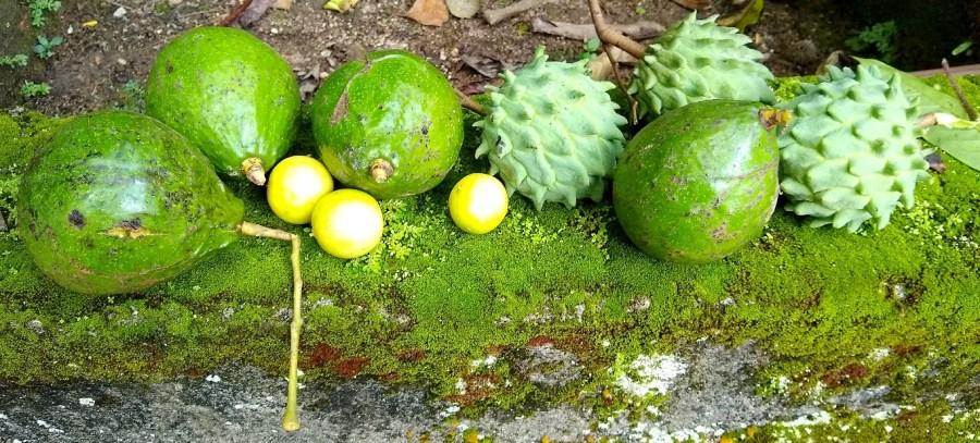 Fruit grown in a backyard