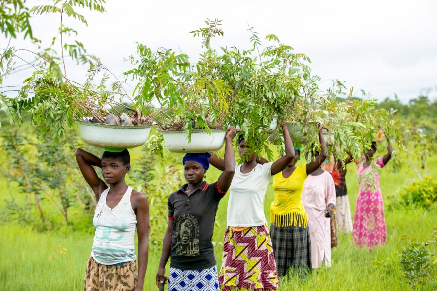 The Daka River is a crucial source of freshwater for hundreds of communities in northern Ghana. Planting along its banks has proven to help maintain its water levels and prevent it drying up. Courtesy of Tree Aid Ghana
