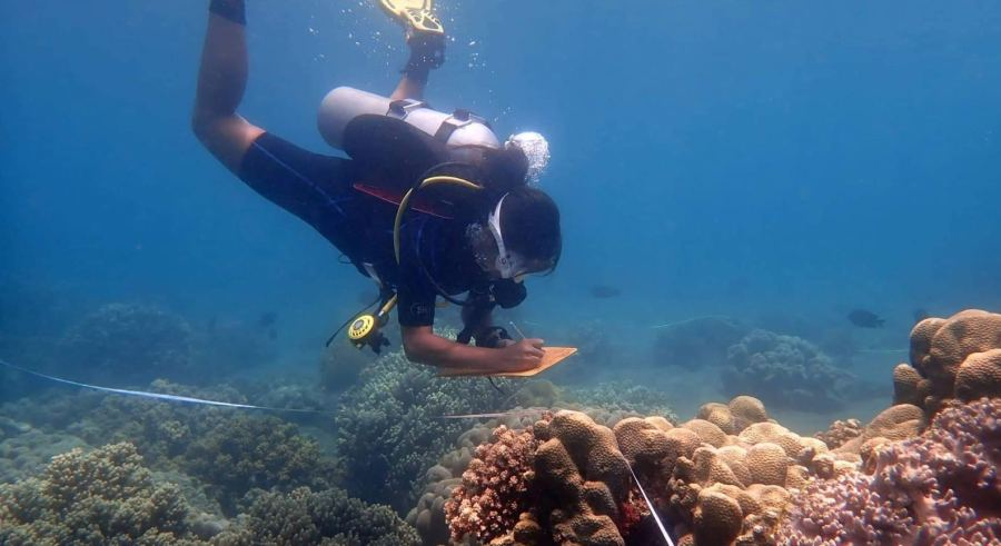Rivera surveying coral reefs in the South Negros Oriental region of the Philippines. Justin K. Davey
