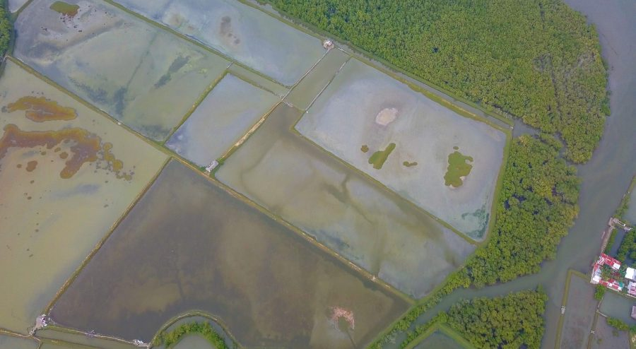 Polluted, unused fishponds in the TSPS. Justin K. Davey
