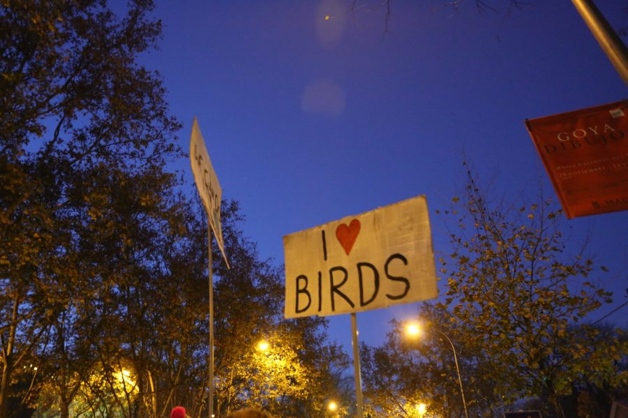 """I love birds"" reads a sign at the climate strikes in Madrid. Melissa Kaye Angel, GLF"