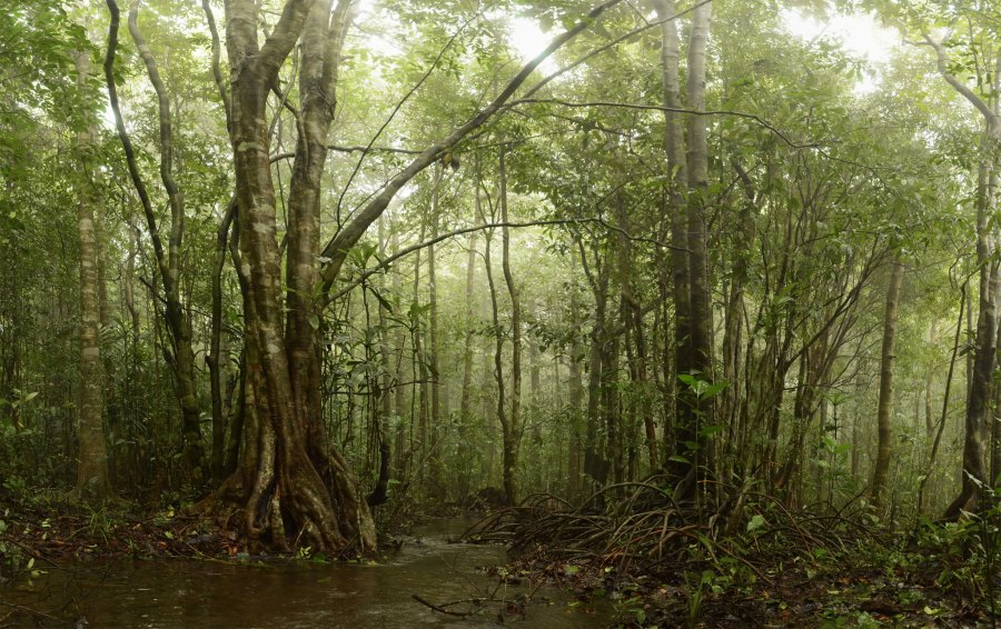 Monsoon forests oscillate between long, dry periods and heavy rainfall. Siddarth Macchado, Flickr
