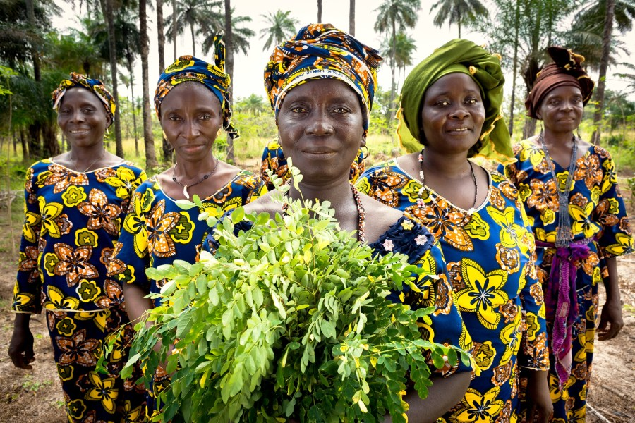 Guinean women farm the moringa plant to improve soil health and generate income through the its sale as a natural supplement on the global market. Joe Saade, UN Women