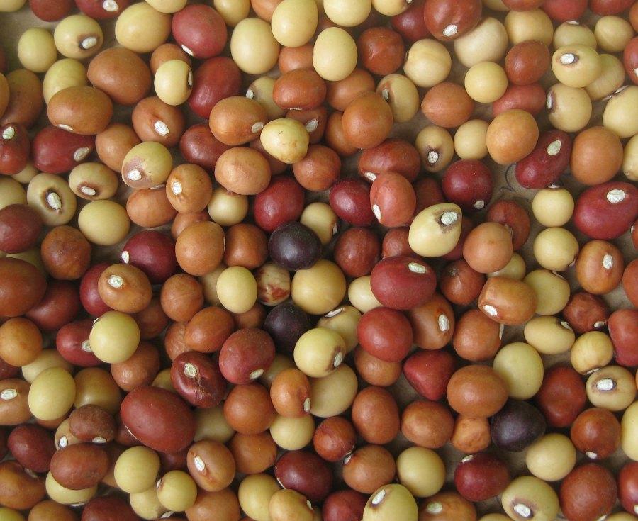 Bambara groundnuts. Ton Rulkens, Flickr