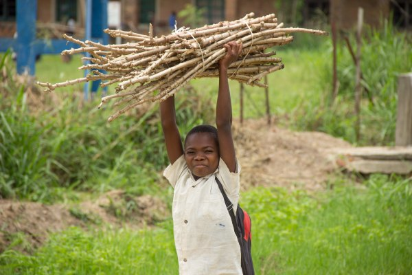 A child holds cuttings of cassava that's been naturally improved to be more resilient to risks posed by climate change. Fiston Wasanga, CIFOR