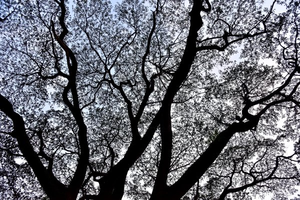 The self-repeating patterns of tree branches are oft-cited examples of fractals as they appear in nature. Abhijit Kar Gupta, Flickr
