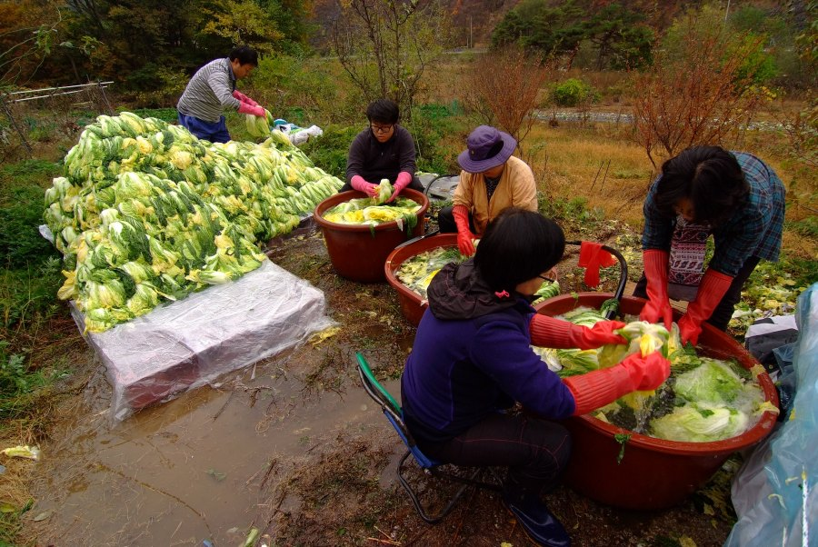 Gimjang, the traditional practice of making kimchi, is listed as a UNESCO Intangible Cultural Heritage. wsyelake, Flickr
