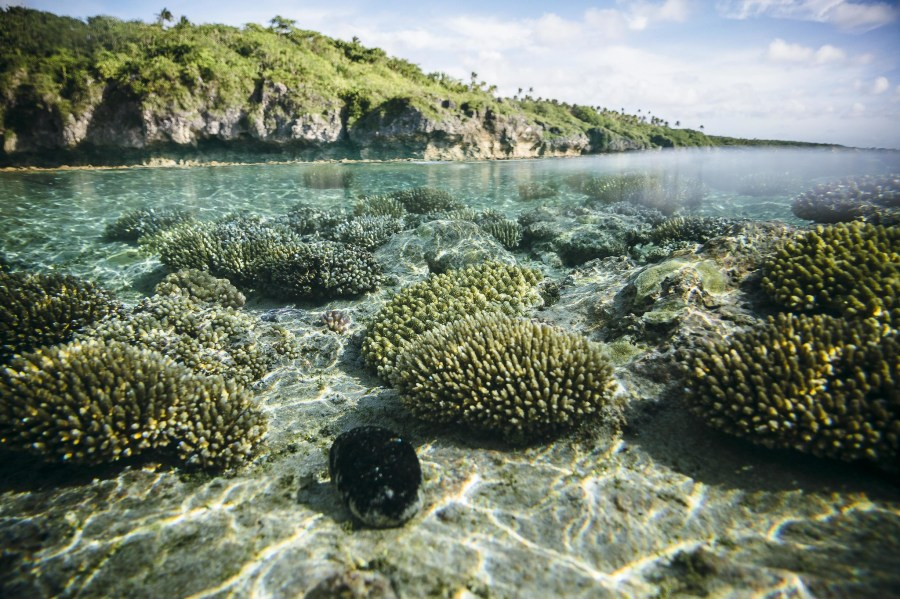 The underwater landscape at Beveridge Reef, Niue. Vlad Sokhin, UNDP