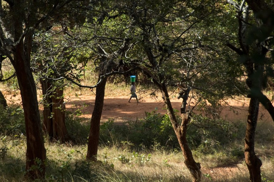 A child carries water through the miombo woodlands in Zambia. Jeff Walker, CIFOR