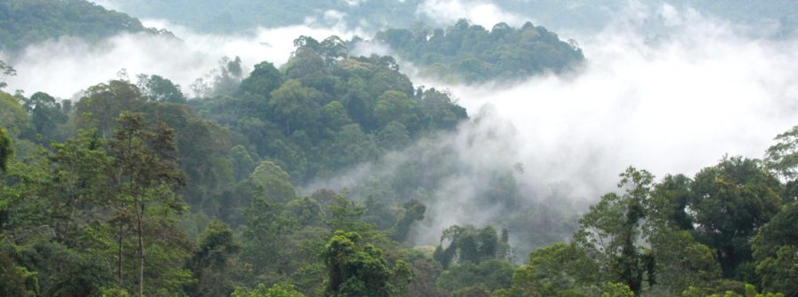 The forests of the Baram region in Malaysian Borneo. Fiona McAlpine