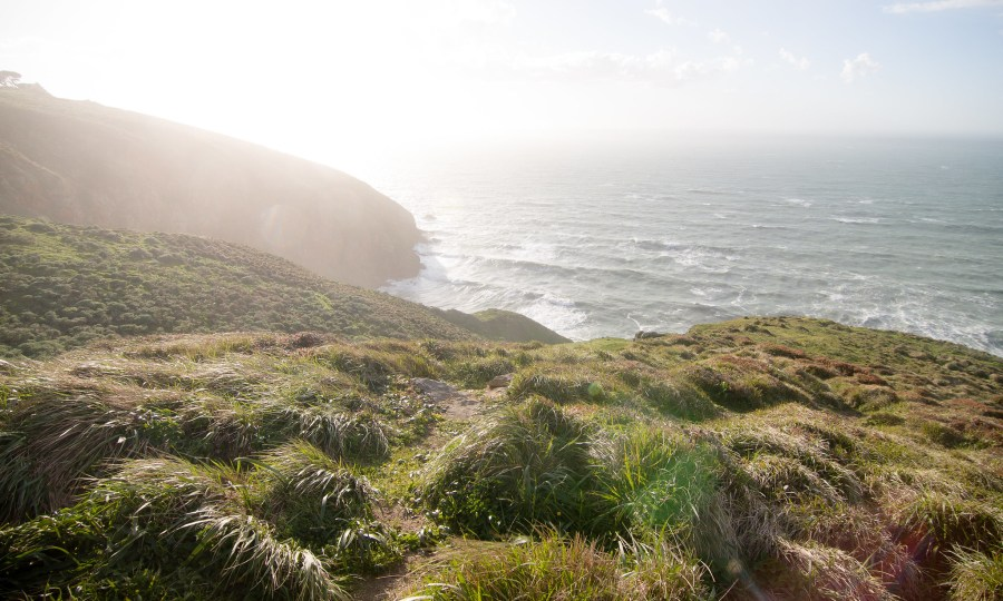 Near San Francisco, Point Reyes is one of the CA-FP's most unique landscapes, characterized by a Mediterranean climate and more than 900 vascular species. Chuck Grimmett, Flickr