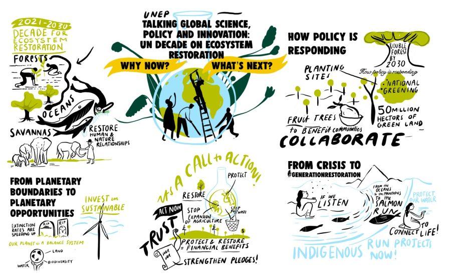 Hablar de ciencia, política e innovación a nivel mundial: la Década de las Naciones Unidas para la Restauración de Ecosistemas. Ilustración por Josie Ford