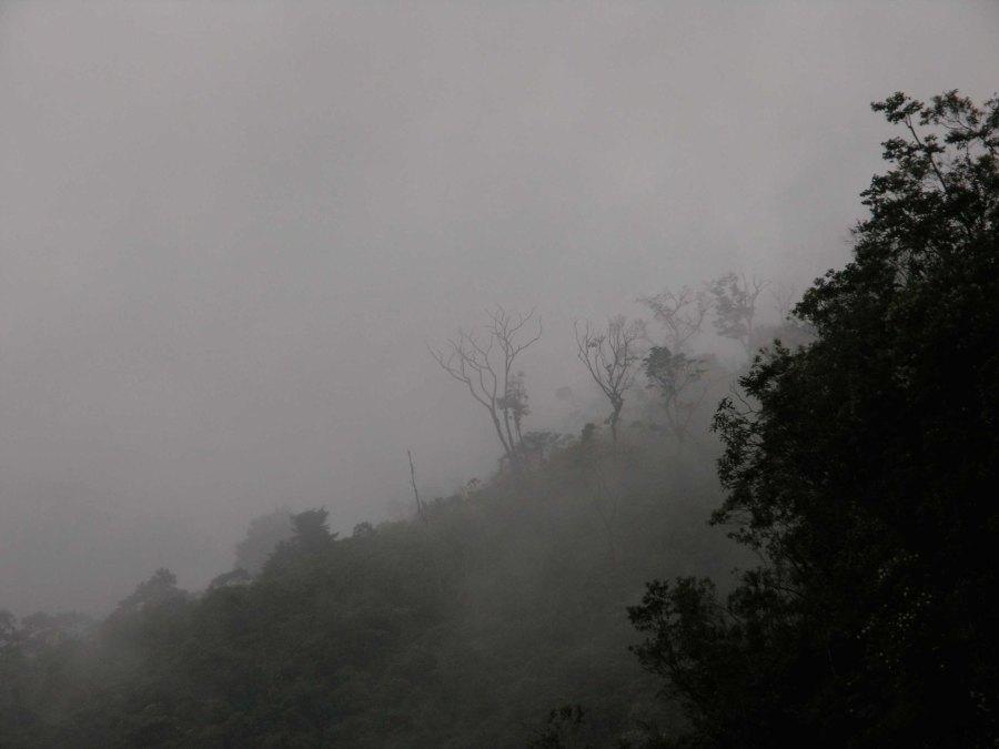 Cloud forest in Lagunas de Montebello National Park in Chiapas, Mexico. Lon&Queta, Flickr