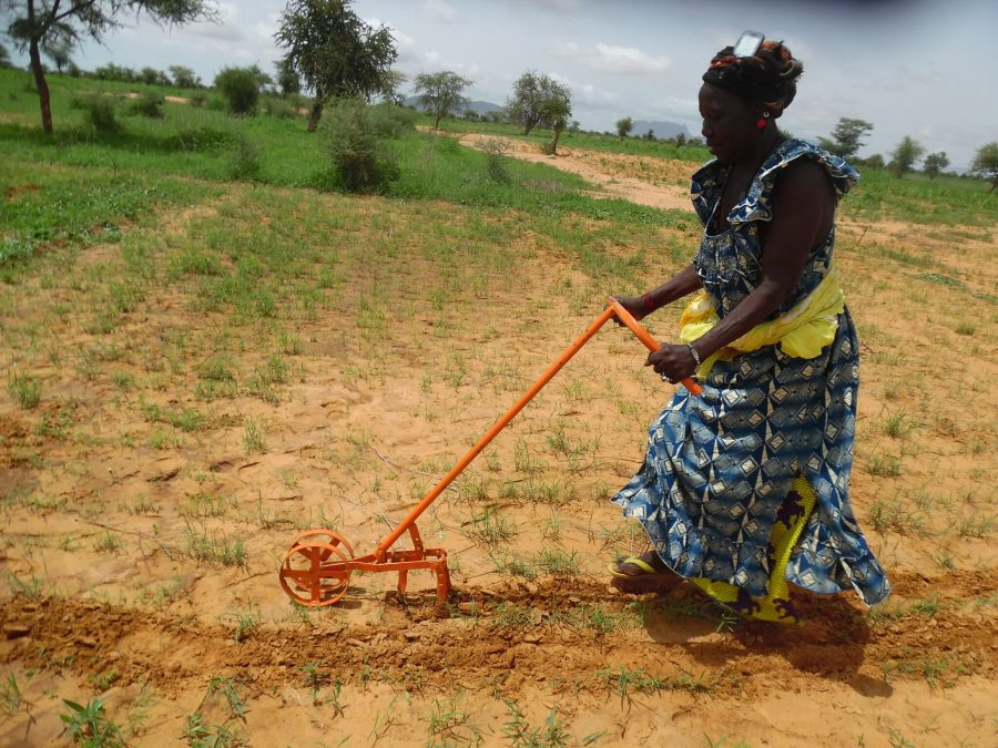 A woman uses a push-weeder on a fonio plot. Hamidou Guindo