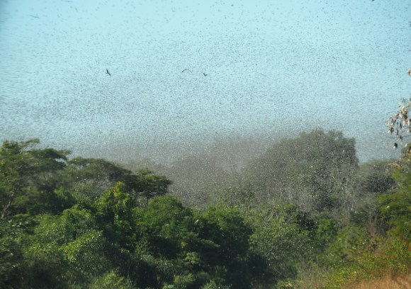 A swarm of locusts clouds the sky in Madagascar in 2016. Hotel Kaesong, Flickr