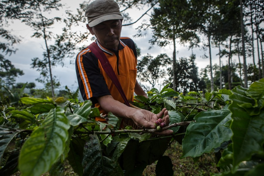 Organic certification can be beyond the affordability of many small farmers. Ulet Ifansasti, CIFOR