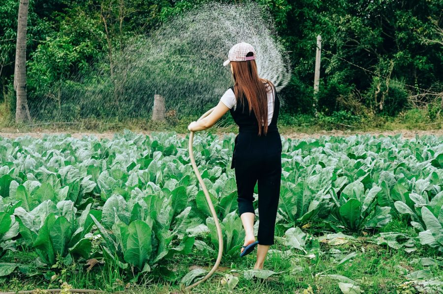 An organic vegetable farm in Vietnam. Tony Pham, Unsplash