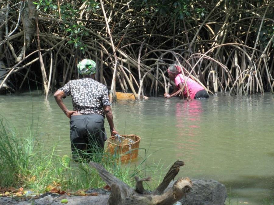 Women gathering mollusks from the mangroves in Cap Estérias. David Stanley, Flickr