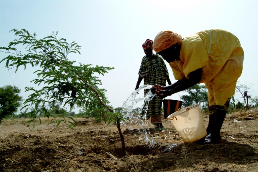 For the people living in the Sahel region of Mali, climate change is an undeniable reality that has seen the past decades become increasingly hot and dry. ©IFAD/Amadou Keita