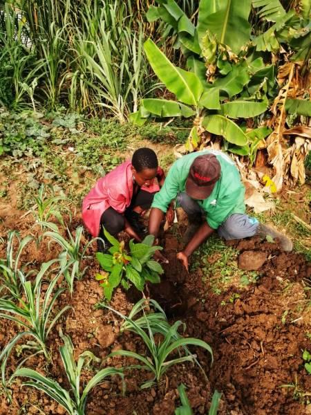 Community members take part in landscape restoration in Nairobi. Courtesy of GLFx Nairobi