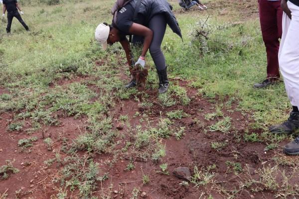 Students pulling out Parthenium at Silole Santuary next to Nairobi National Park. Enviro Wild Initiative