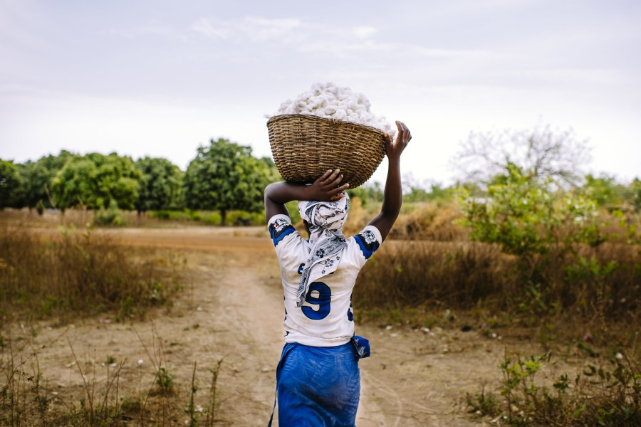 A woman carries freshly harvested cotton in Burkina Faso. Ollivier Girard, CIFOR