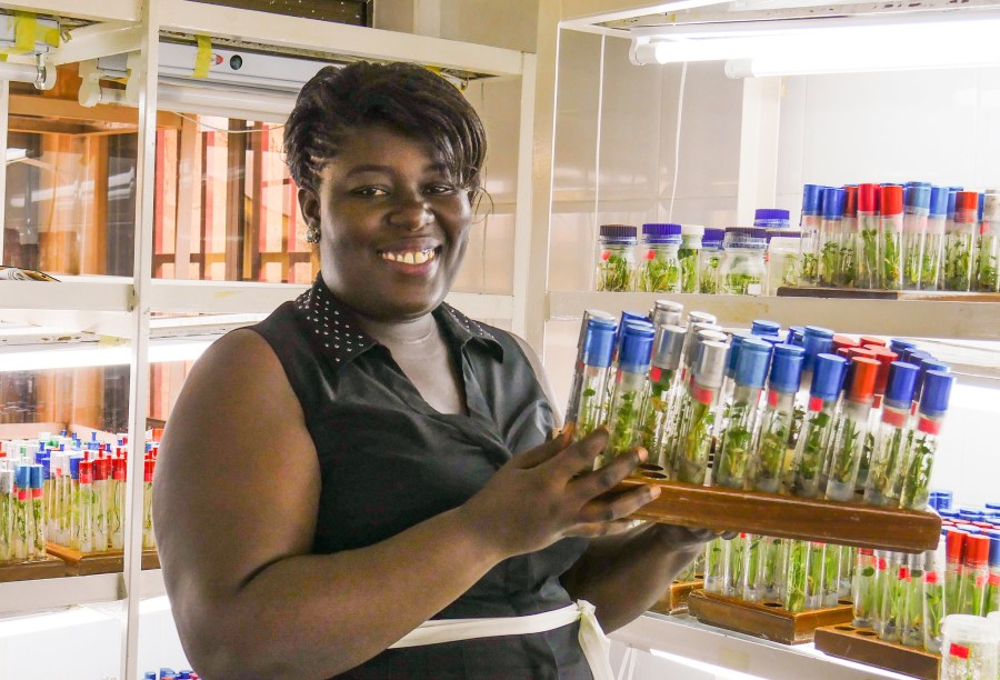 The Plant Genetic Resources Research Institute in Ghana works to preserve the biodiversity of African plant species. Crop Trust, Flickr