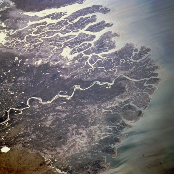 Satellite images, such as this one of the Indus River Delta, could be used to monitor forestation efforts. eutrophication&hypoxia, Flickr