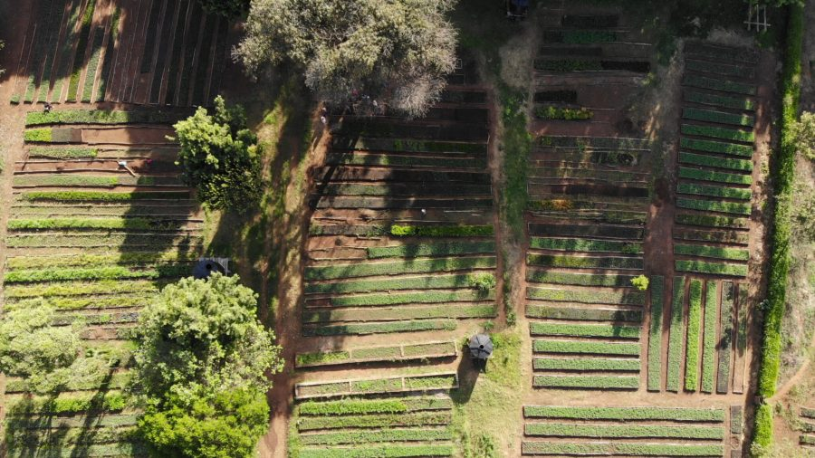 A tree nursery set up by Nature Kenya, governed by a local community and aided with support from conservation organization partners. Courtesy of Nature Kenya
