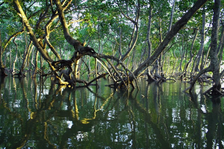 Mangroves, Mida Creek, Kenya