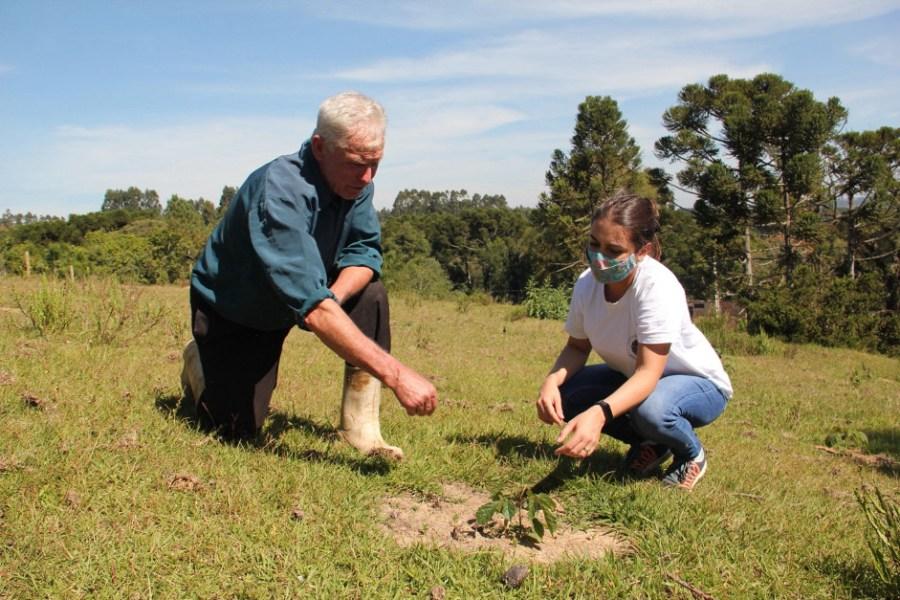 O agricultor Pedro Micalski, de São João do Triunfo (PR), acompanha o crescimento de uma muda com uma técnica do projeto Conexão Araucária. Foto: Marina Cioato