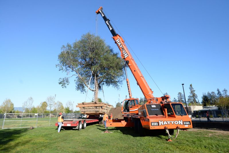 Tree Removal and Relocation Projects Make Way for Upcoming Athletic and Performing Arts Centers — Video Included!