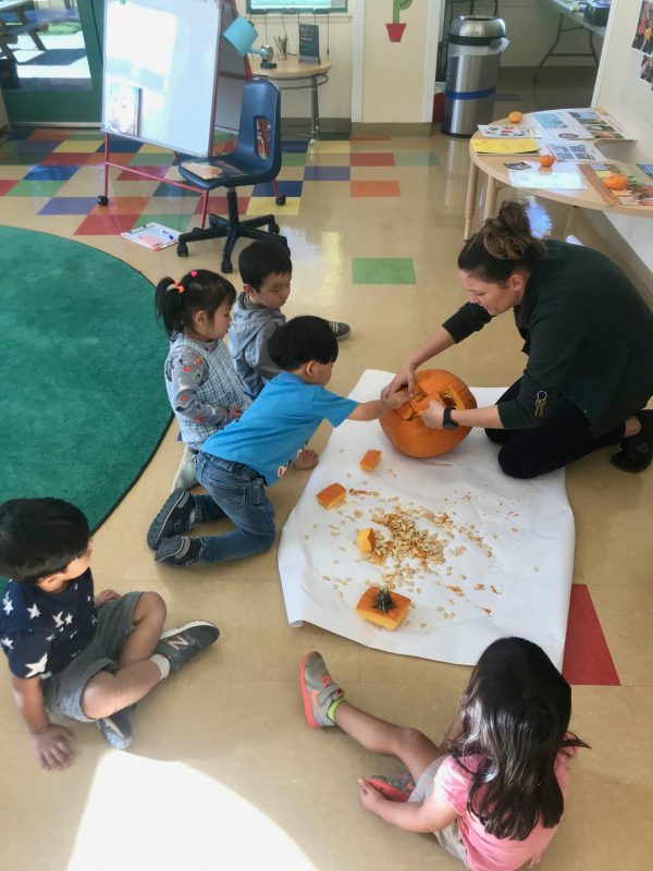 Harker preschoolers carve pumpkins, learn the cycle of plant life reading 'Pumpkin Jack'