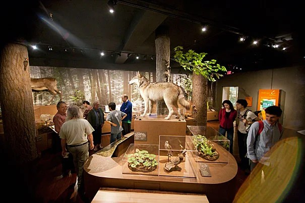 """""""I grew up here, I love the forests, and walking through the woods,"""" said Paul Zofnass, a Harvard alumnus whose $500,000 gift made the exhibit possible. """"What we're trying to do is not just show all the species and how different they are, but also how they're related to each other."""""""